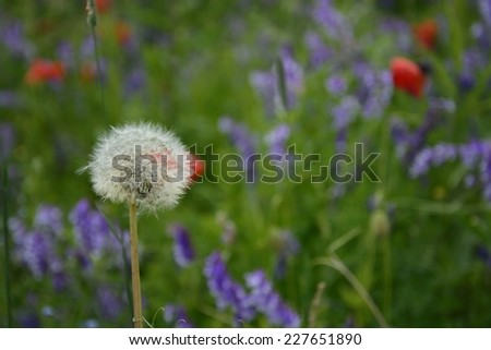 Classic Polish countryside, fields, meadows, lakes, hills, ponds, windmills, poppies, lavender. - stock photo