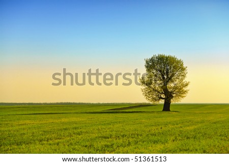 classic rural landscape with lonely tree in sunset light - stock photo