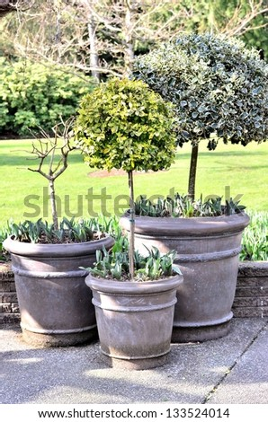 Classic tree pot in the garden - stock photo