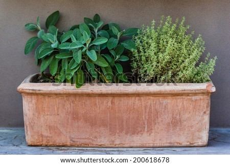 Clay pot with two herb plants on a bench. - stock photo