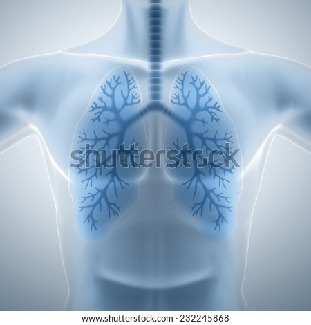 Clean and healthy lungs - stock photo