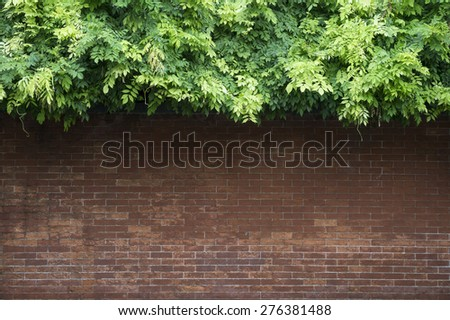 Clean brick wall background topped by lush greenery