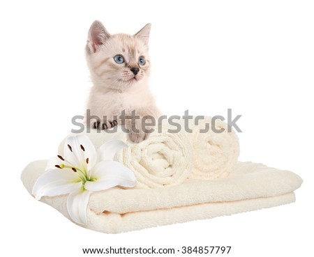 Clean towels and kitten. Home comfort. isolated