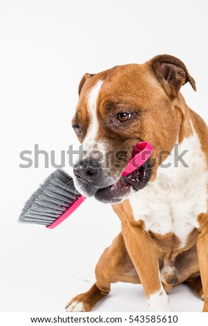 Cleaning dog, duster, whis