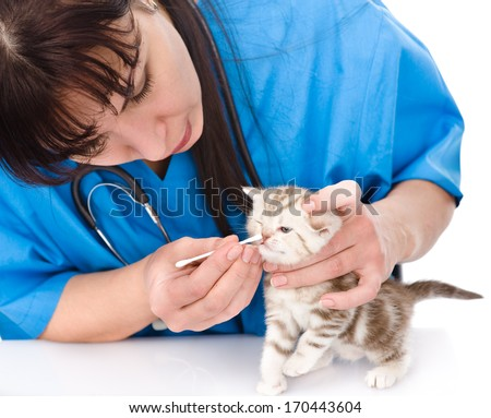 cleaning nose kitten in a veterinary clinic. isolated on white background - stock photo