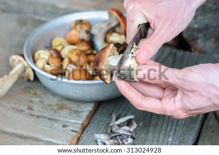 Cleaning process of edible forest mushrooms with man hands - stock photo