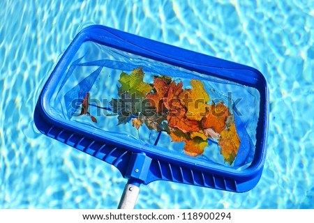 Cleaning swimming pool of fall leaves with blue skimmer before closing - stock photo