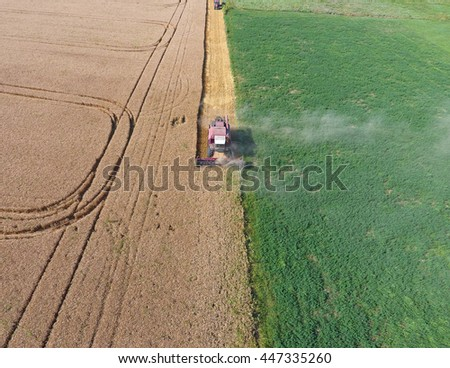 Cleaning wheat harvester. Ripe wheat harvester mowed and straw easily sprayed behind him. Top view. - stock photo