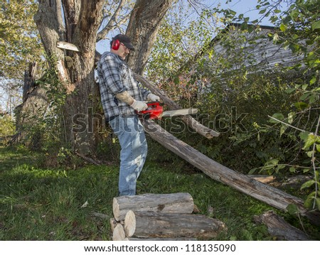 Cleanup operations of a large maple tree that had fallen - stock photo