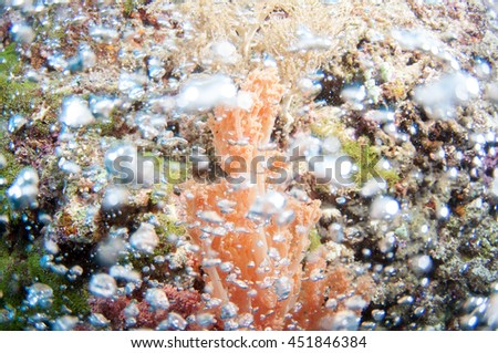 Clear bubbles underwater