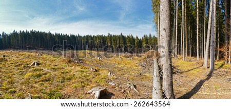 Clear-Cutting of a Pine Forest, destroyed landscape with blue sky  - stock photo