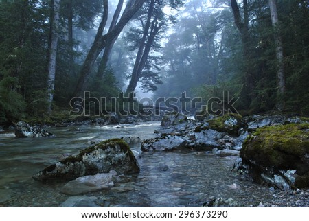 Clear stream running through mysterious, misty forest. - stock photo