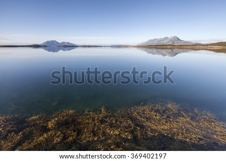 Clear sunny day at Norwegian coast. Bladder wrack covering water surface on foreground, mountains at horizon.