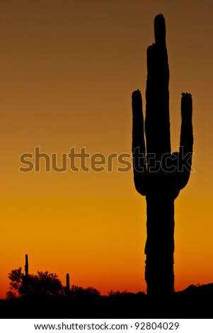 Clear sunset with a saguaro cactus in silhouette.