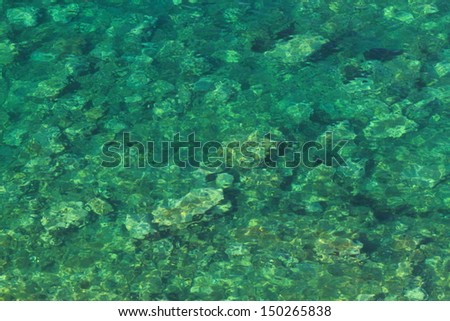 Clear water of the Adriatic sea on Montenegro coastline