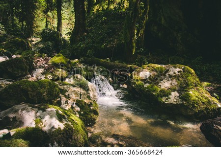 Clear Water Stream river in forest Landscape scenic view ecology concept - stock photo