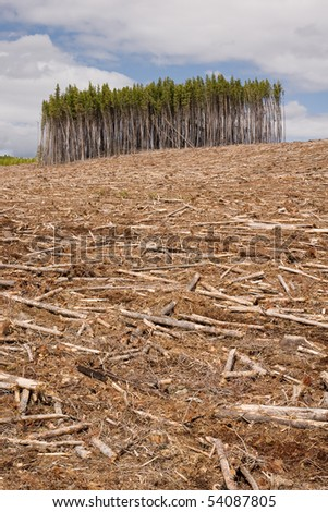 Clearcut Forest and timber - stock photo
