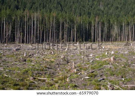 Clearcut forestry in British Columbia Canada. - stock photo