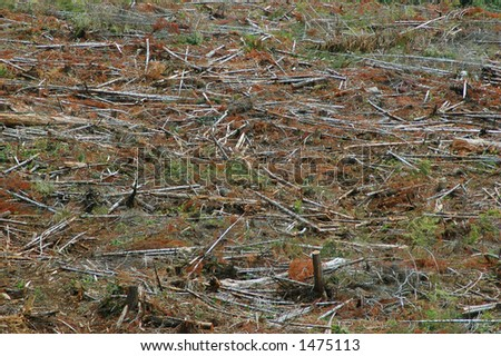 Clearcut logging - stock photo
