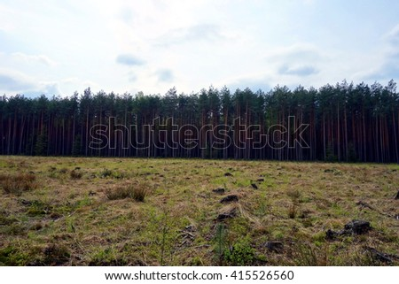 clearing area in forest  - stock photo