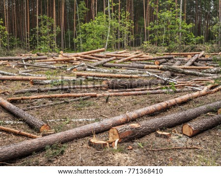 Clearing in the forest after felling of trees. Pines and birches are lying on the ground.