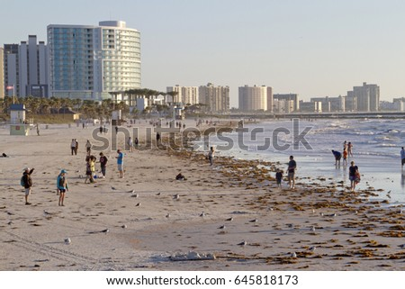 Clearwater, Florida - January 24, 2017: Late afternoon at Clearwater Beach as people wander and wade in the warm Gulf of Mexico water among colorful buildings and washed up seaweed that line the shore