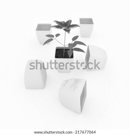 Clematis a beautiful flower in the white pot - stock photo