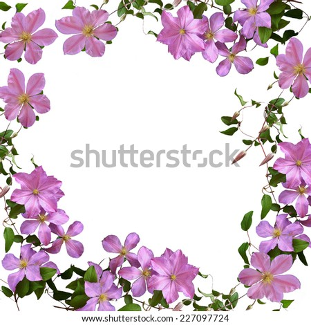 clematis - floral frame - isolated - background for your text - stock photo