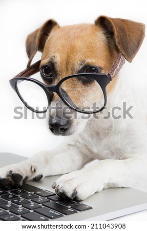 Clever dog with glasses uses computer - stock photo