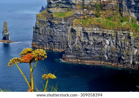 Cliff of moher flora - stock photo