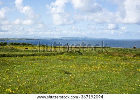 cliff walk in ballybunion county kerry on the wild atlantic way with a field of buttercups in foreground - stock photo