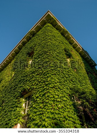 Climbing vine covering a brick two story building corner at Toronto University in Ontario Canada.