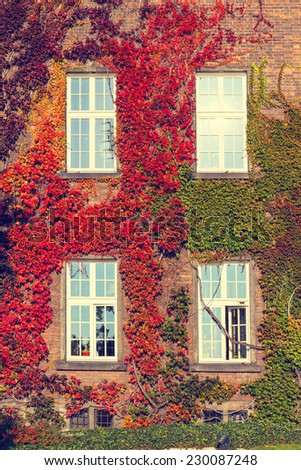 Climbing vines of ivy on a house, vintage look - stock photo