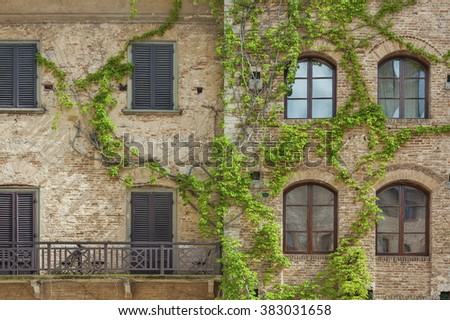 Climbing Vines of Ivy on House