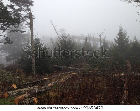 Clingman's Dome in Great Smoky Mountains National Park - stock photo