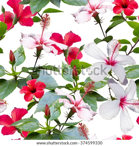 CLIP ART - COLLAGE. Close up red and white tropical flowers hibiscus isolated on a white. Floral seamless pattern. Photo collage beautiful clip art for floral design.  - stock photo