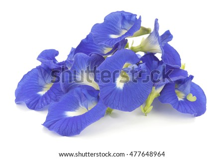 Clitoria ternatea also known as the Butterfly Pea Flower, used as natural food coloring in Asia cuisine