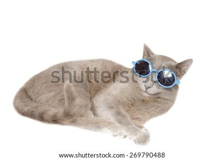Clopseup of domestic fun cat with sunglasses - stock photo