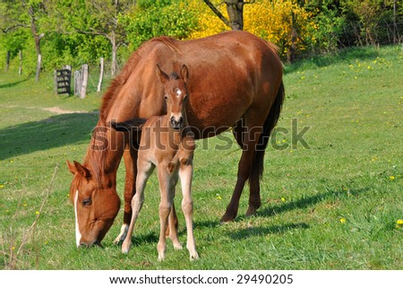 close by mother - stock photo