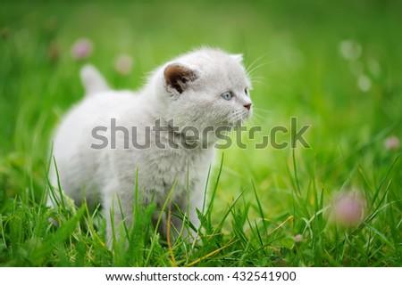 Close cute gray baby kitten in green grass  - stock photo