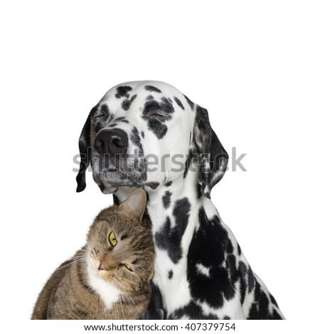 close friendship between a cat and a dog -- isolated on white - stock photo