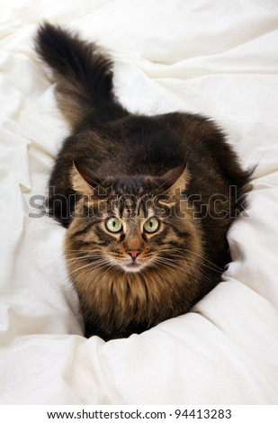 Close image of lying cat - stock photo