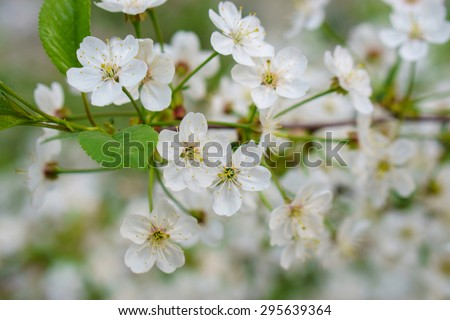 Close look at beautiful white flowers - stock photo