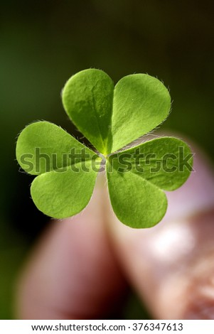 Close of three leaf clover