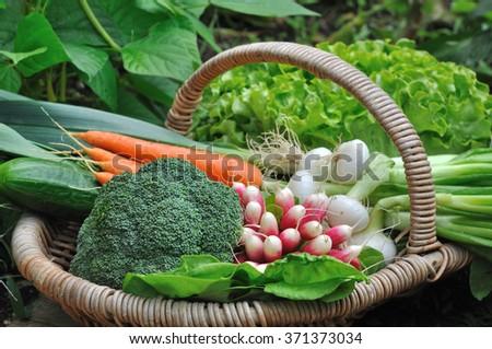 close on full vegetable basket in garden  - stock photo