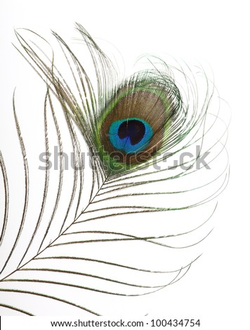 Close op of peacock feathers over white