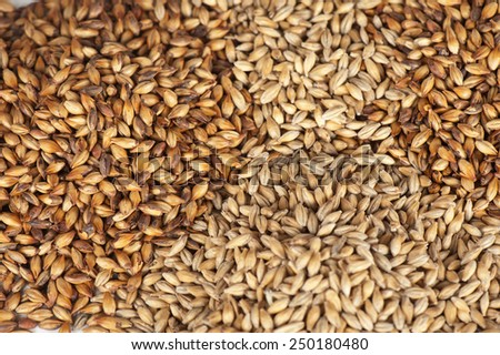 Close photo up of malt grains - stock photo