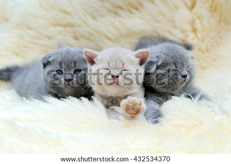 Close three funny little gray kitten on white blanket - stock photo