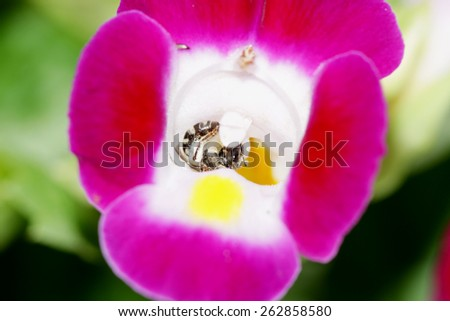 Close-up a bee on wild flower  - stock photo