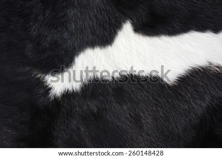 close-up a cowhide for background - stock photo